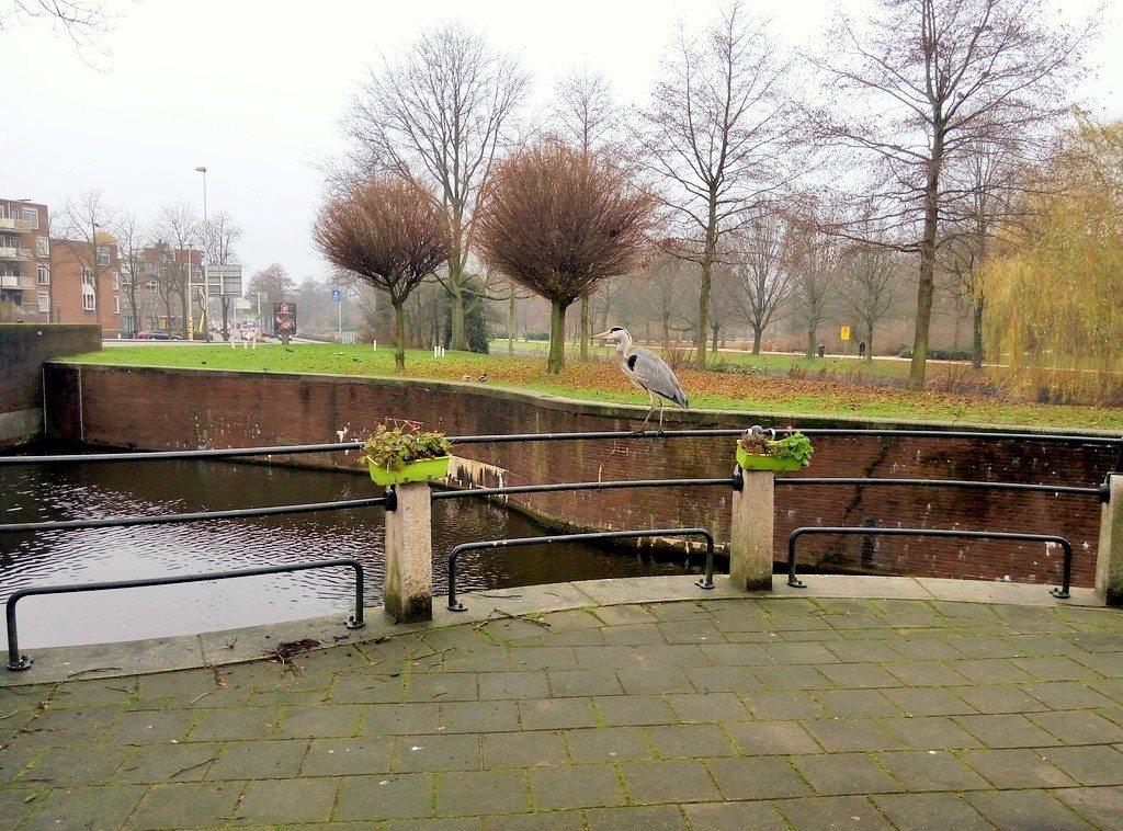 Парки в Амстердаме