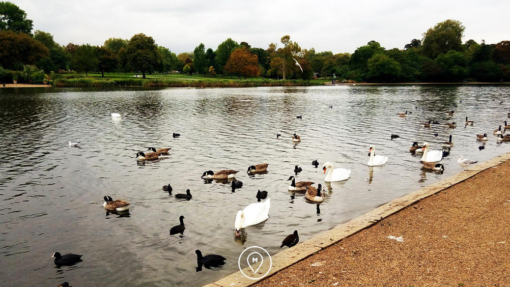Озеро в Гайд Парке в Лондоне